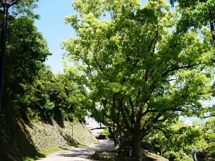 緑が美しい和歌山城公園  2021-05-11 00:00_b0093754_22542966.jpg