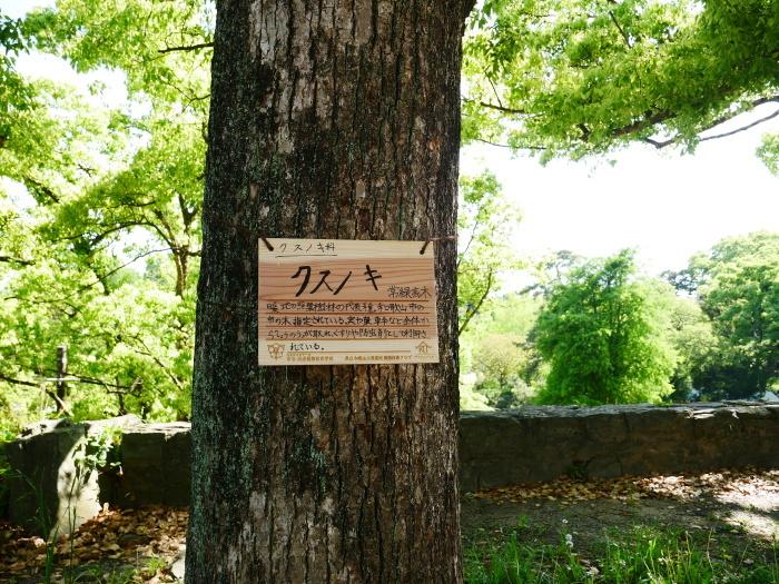 緑が美しい和歌山城公園  2021-05-11 00:00_b0093754_22563676.jpg