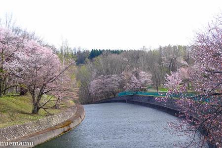 聖台ダムと桜~2021年5月_d0340565_19333564.jpg