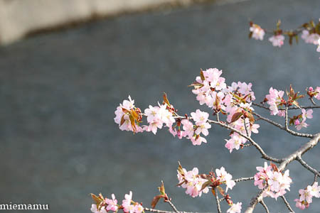聖台ダムと桜~2021年5月_d0340565_19334925.jpg