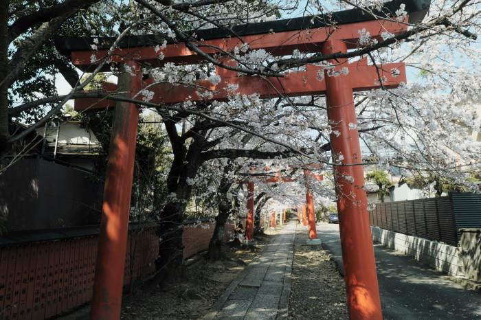 京都 桜 2021_f0021869_21200169.jpg