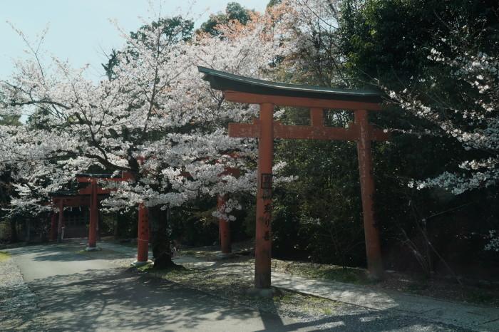 京都 桜 2021_f0021869_21200377.jpg