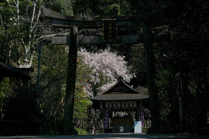 京都 桜 2021_f0021869_21300553.jpg