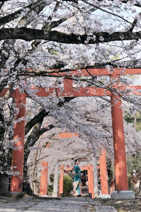 京都 桜 2021_f0021869_21462554.jpg