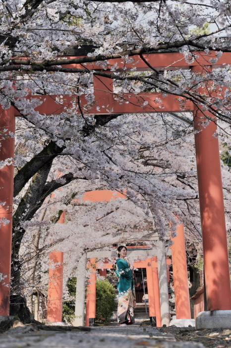 京都 桜 2021_f0021869_21462566.jpg