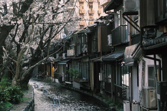 京都 桜 2021_f0021869_21555582.jpg