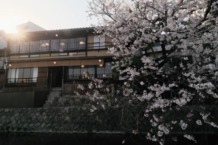 京都 桜 2021_f0021869_22002066.jpg