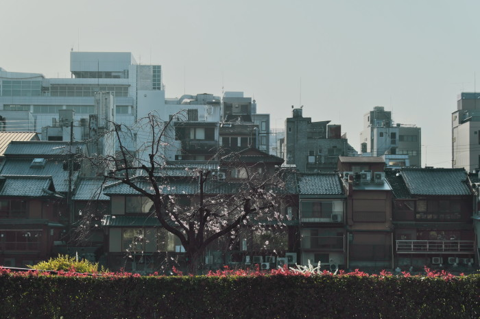 京都 桜 2021_f0021869_22002107.jpg
