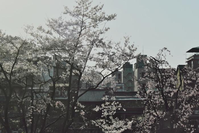 京都 桜 2021_f0021869_22013229.jpg