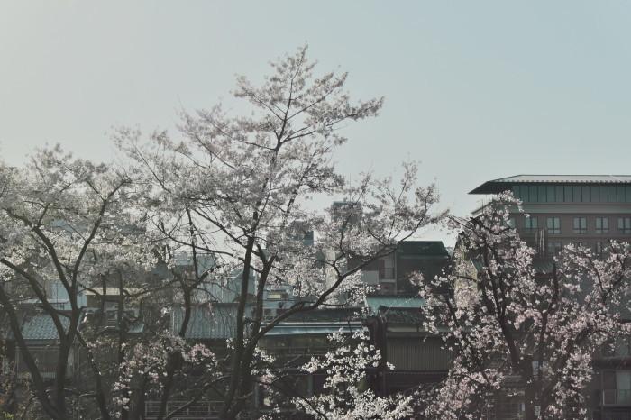 京都 桜 2021_f0021869_22013293.jpg