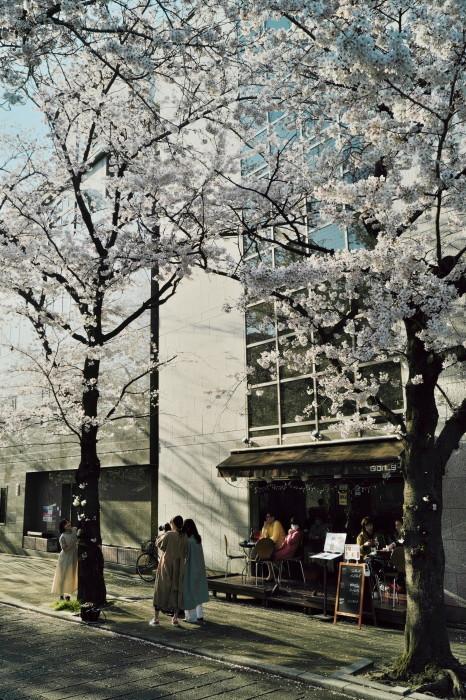 京都 桜 2021_f0021869_22065257.jpg