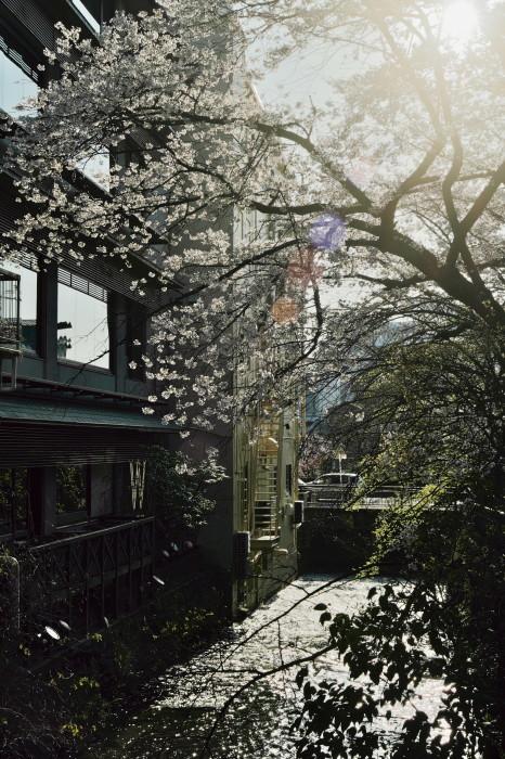 京都 桜 2021_f0021869_22065387.jpg