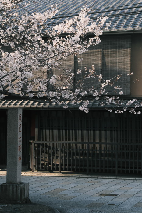 京都 桜 2021_f0021869_22091055.jpg