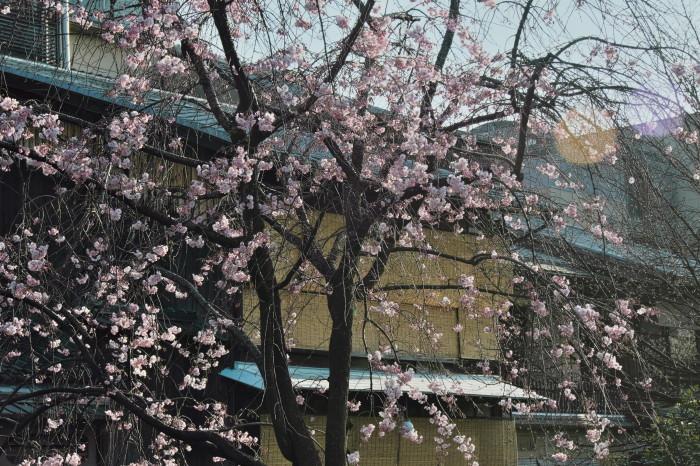 京都 桜 2021_f0021869_22091182.jpg