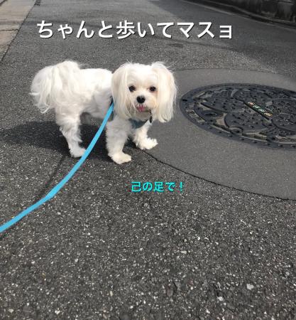 ちゃんと歩いているの_b0193480_15094412.jpeg