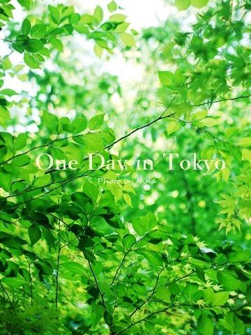 新緑したたる、One Day in Tokyo_f0245680_16001435.jpg