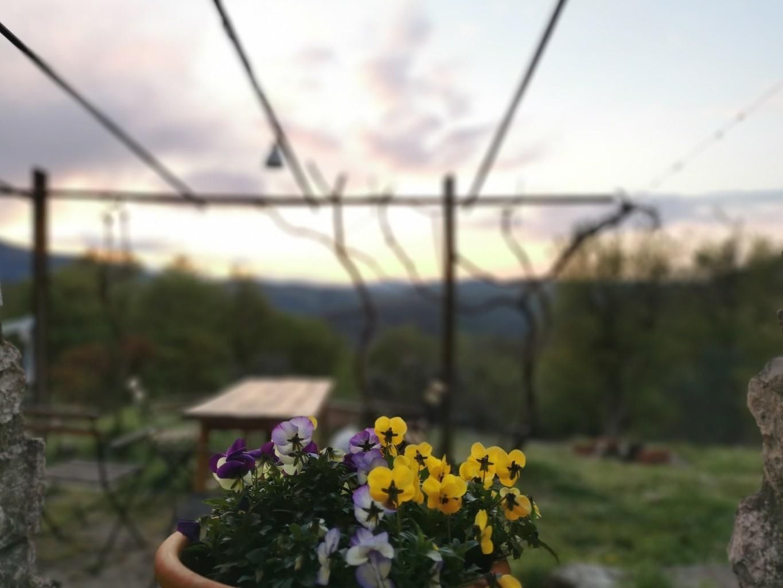 5月の近況 - フィレンツェ田舎生活便り2