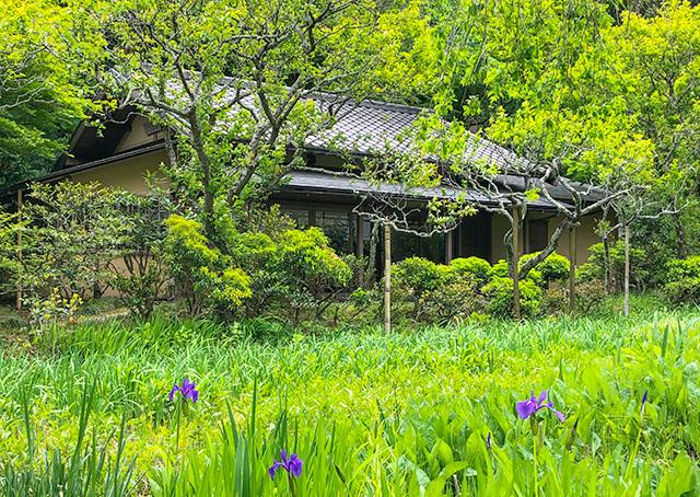 東慶寺の新緑_b0145398_22441421.jpg