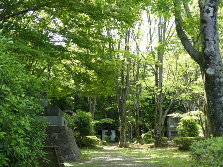 岩槻城址公園 2021年5月の睡蓮の様子_f0296312_15573903.jpg