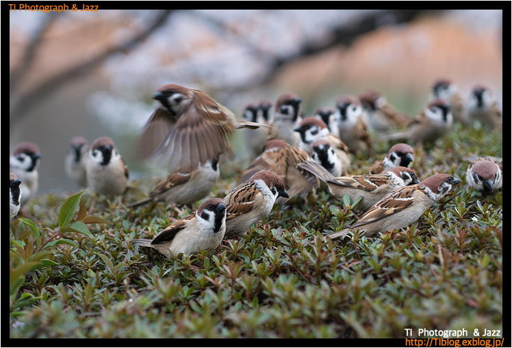 上野の鳥 Part 4_b0134013_04073962.jpg