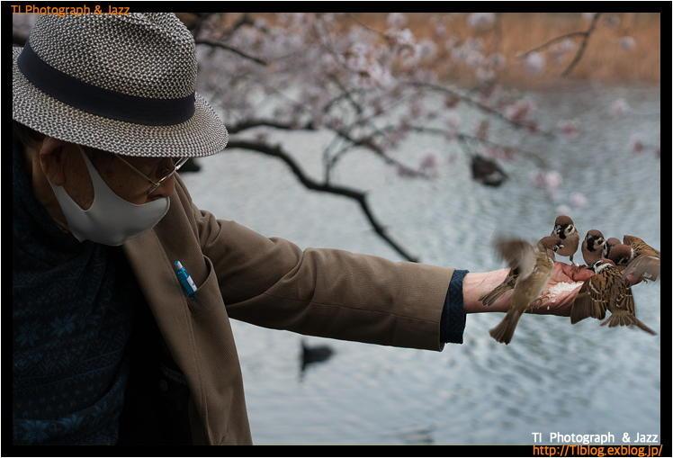 上野の鳥 Part 4_b0134013_04074073.jpg