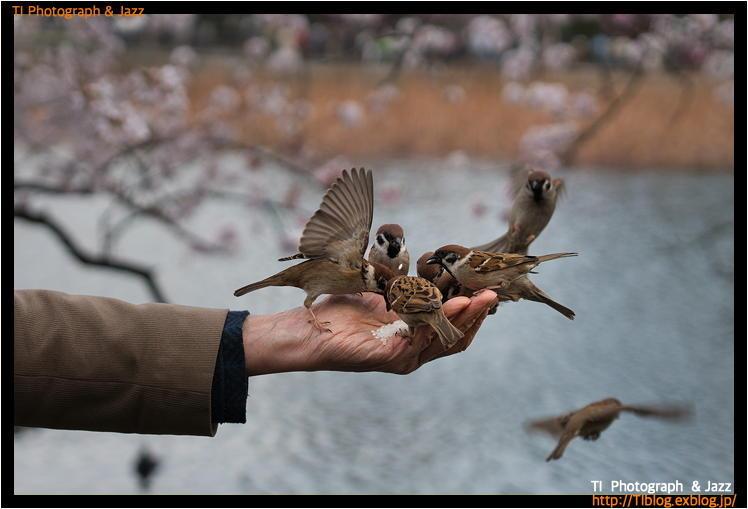 上野の鳥 Part 4_b0134013_04074092.jpg