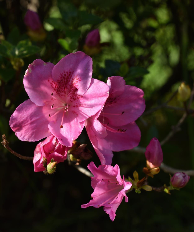 休日の庭散策_d0355116_20392826.jpg