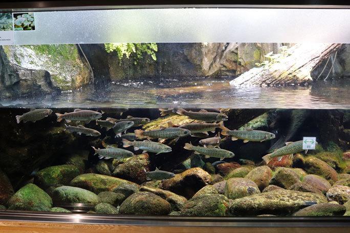 水生物館の多彩な水槽群(井の頭自然文化園 March 2020)_b0355317_11543375.jpg