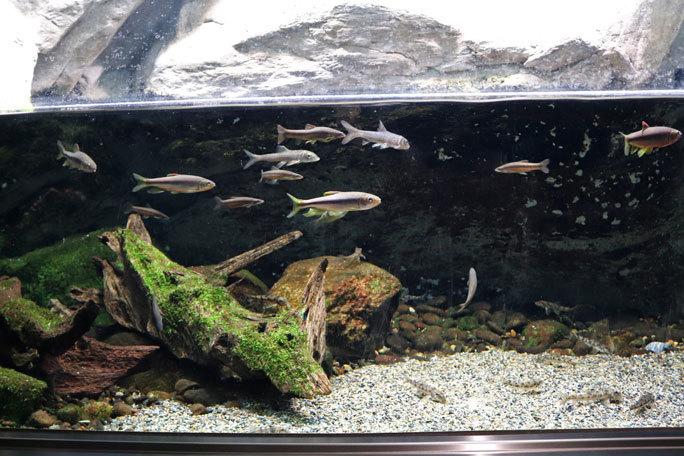 水生物館の多彩な水槽群(井の頭自然文化園 March 2020)_b0355317_11554881.jpg