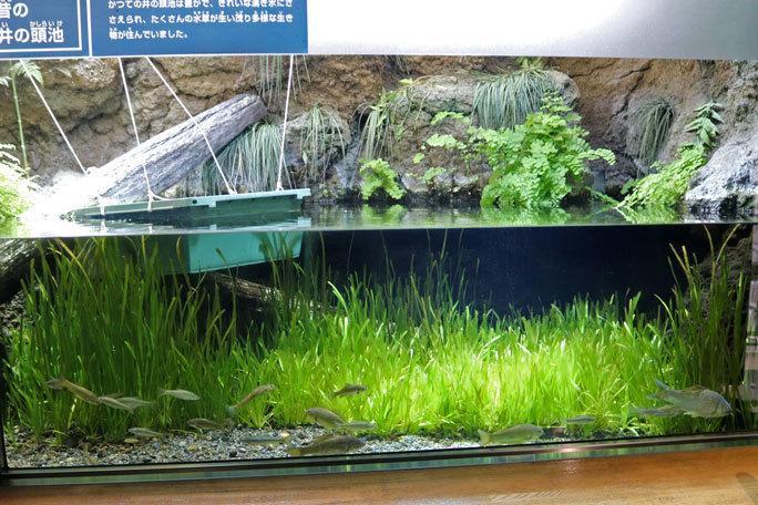 水生物館の多彩な水槽群(井の頭自然文化園 March 2020)_b0355317_11580611.jpg