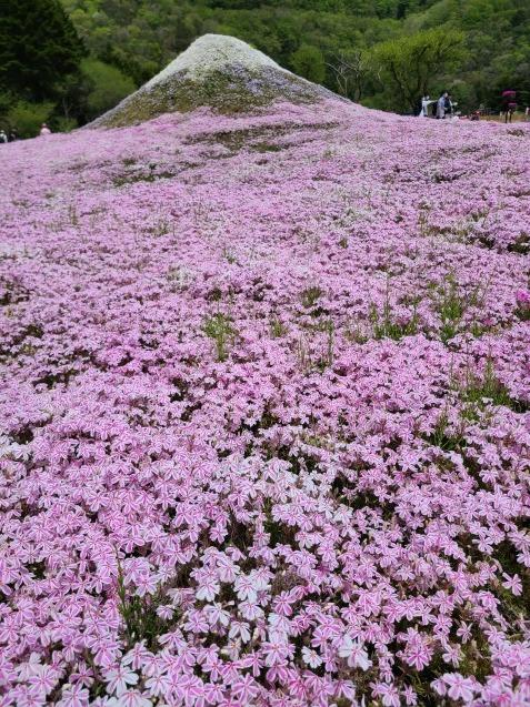富士芝桜まつり_c0124528_06375298.jpg