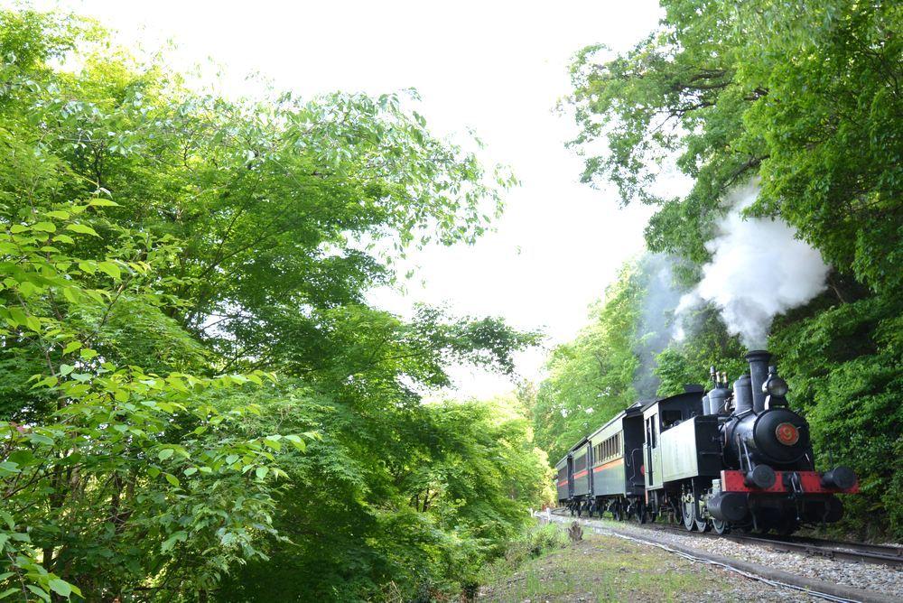 新緑と9号機関車_e0373930_19540733.jpg