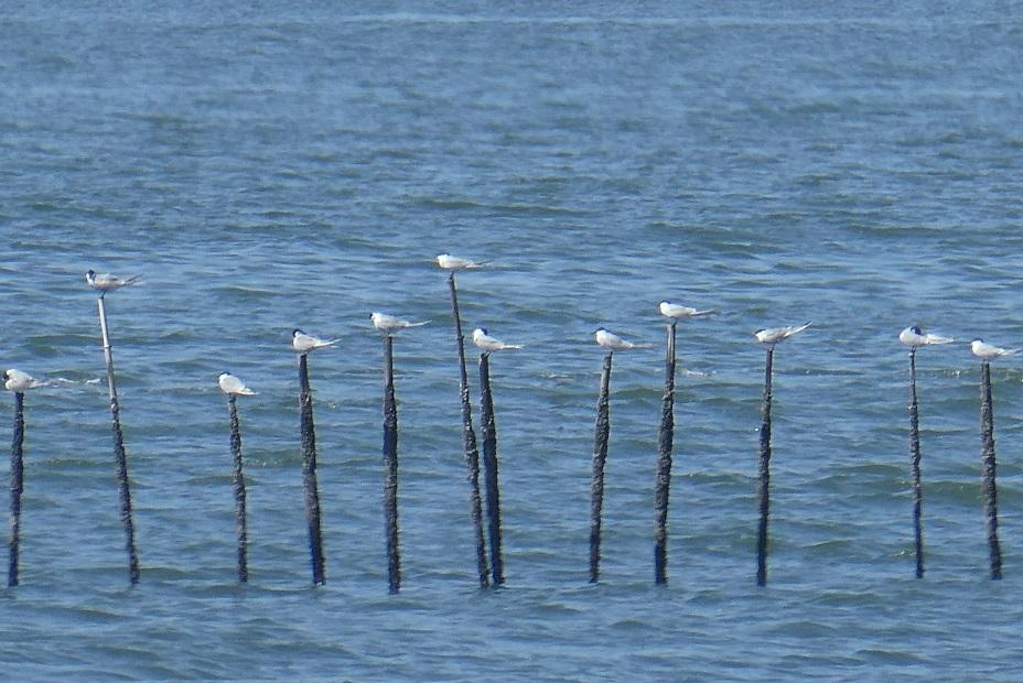 バードウォッチング・ツアー@葛西臨海・海浜公園 その1_d0288144_23343100.jpg