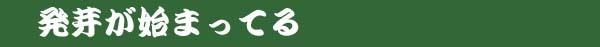 西神梅(中国春蘭)          No.2096_d0103457_17434635.jpg