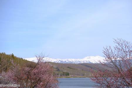 桜と野鳥さんと~5月の聖台ダム2021_d0340565_19194347.jpg