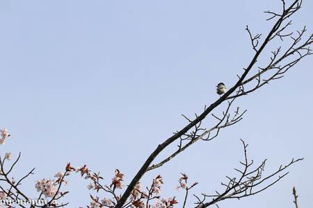 桜と野鳥さんと~5月の聖台ダム2021_d0340565_19195374.jpg