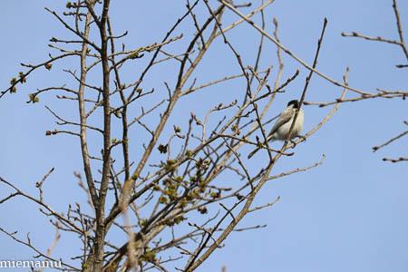 桜と野鳥さんと~5月の聖台ダム2021_d0340565_19200374.jpg