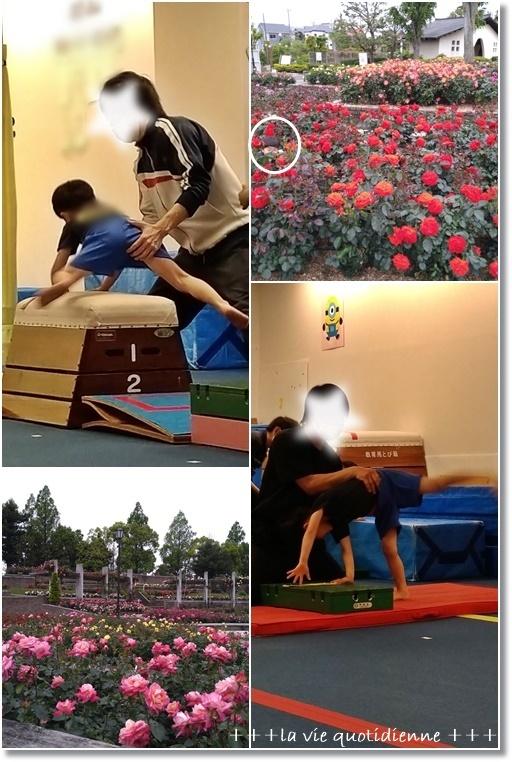 【バラ公園】伊丹の荒牧バラ公園の様子とダンナさんも王子も凄く頑張った土曜日_a0348473_07091657.jpg