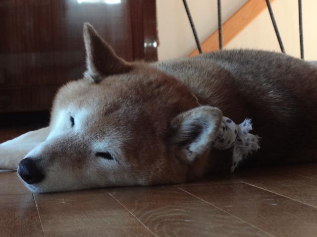 ストレスだったの?/2016年の眠るケン画像回想_c0221299_14201213.jpg