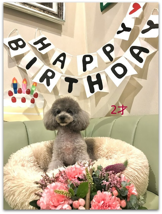 * HAPPY BIRTHDAY TO フラン♡ *_d0317115_19405467.jpg
