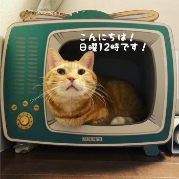 にゃんチャンネルTV_c0087521_23301729.jpg