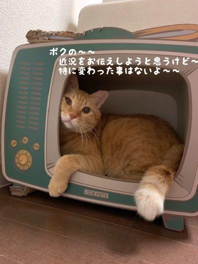 にゃんチャンネルTV_c0087521_23302449.jpg