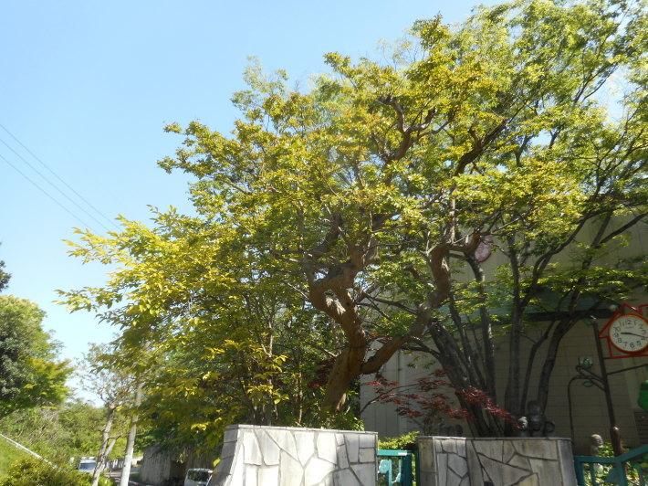 5月10日 月曜日の朝の登園風景から_a0212624_10423657.jpg