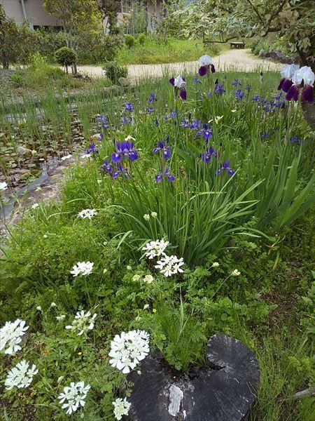 英国の庭_a0384327_21421534.jpg