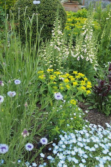 英国の庭_a0384327_21424403.jpg