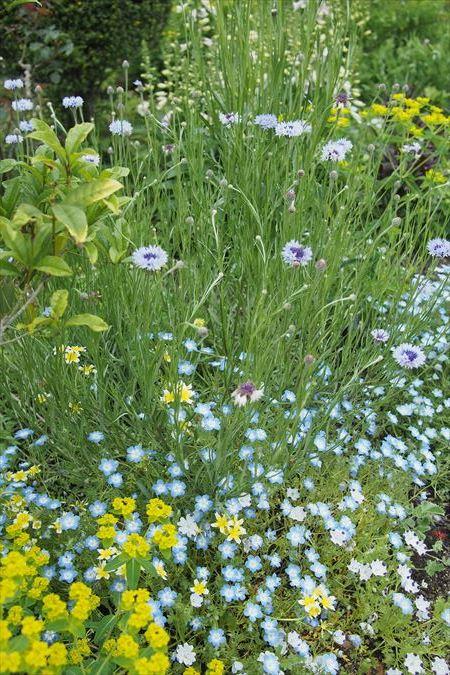 英国の庭_a0384327_21424423.jpg