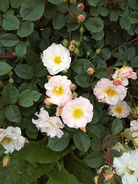 英国の庭_a0384327_21484114.jpg