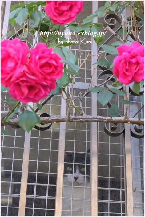 ネコ窓_f0166234_23012015.jpg