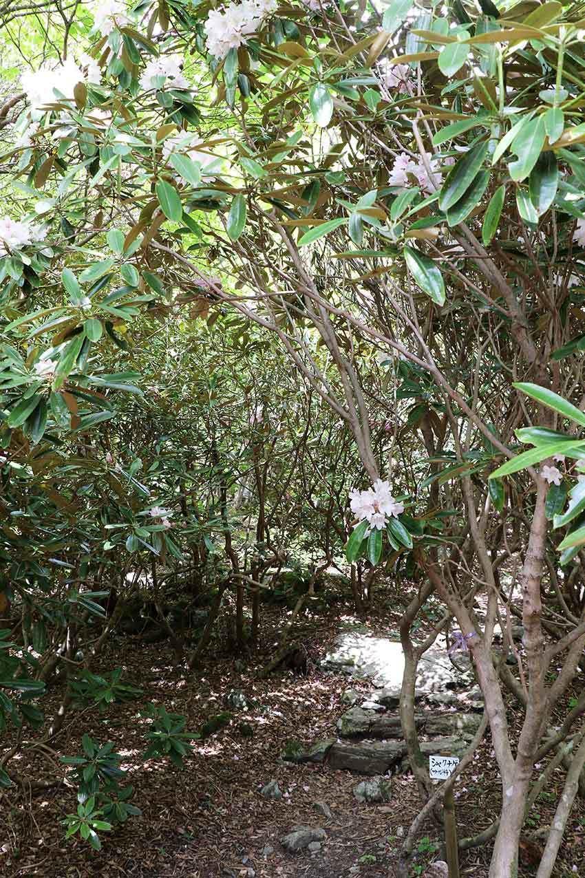 2021年 四国山岳植物園「岳人の森」-01♪_d0058941_19494187.jpg