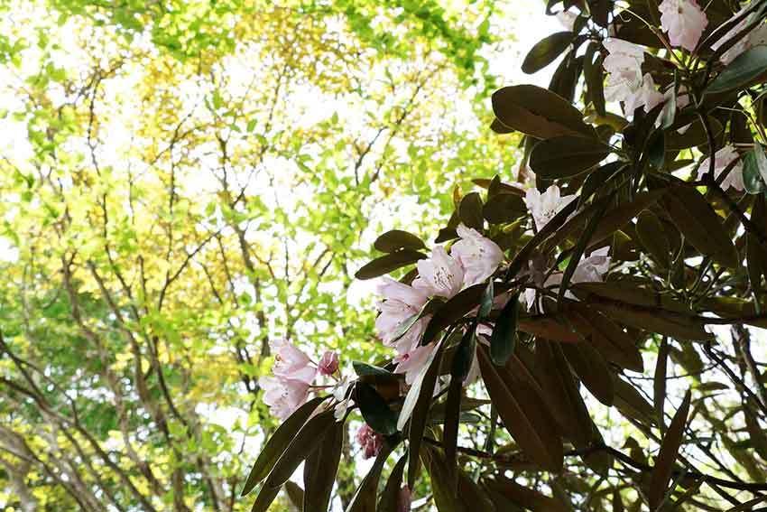 2021年 四国山岳植物園「岳人の森」-01♪_d0058941_19501037.jpg